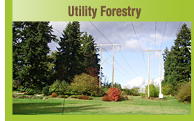 Utility Forestry